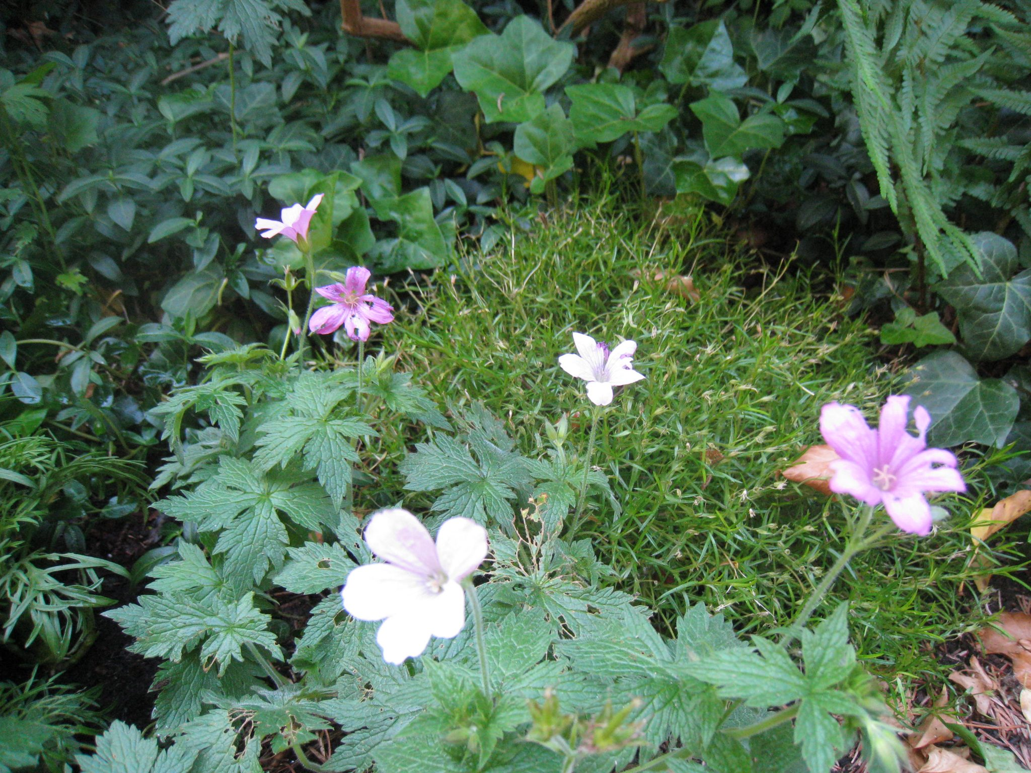 What I Learned About Marketing from Wild Geraniums