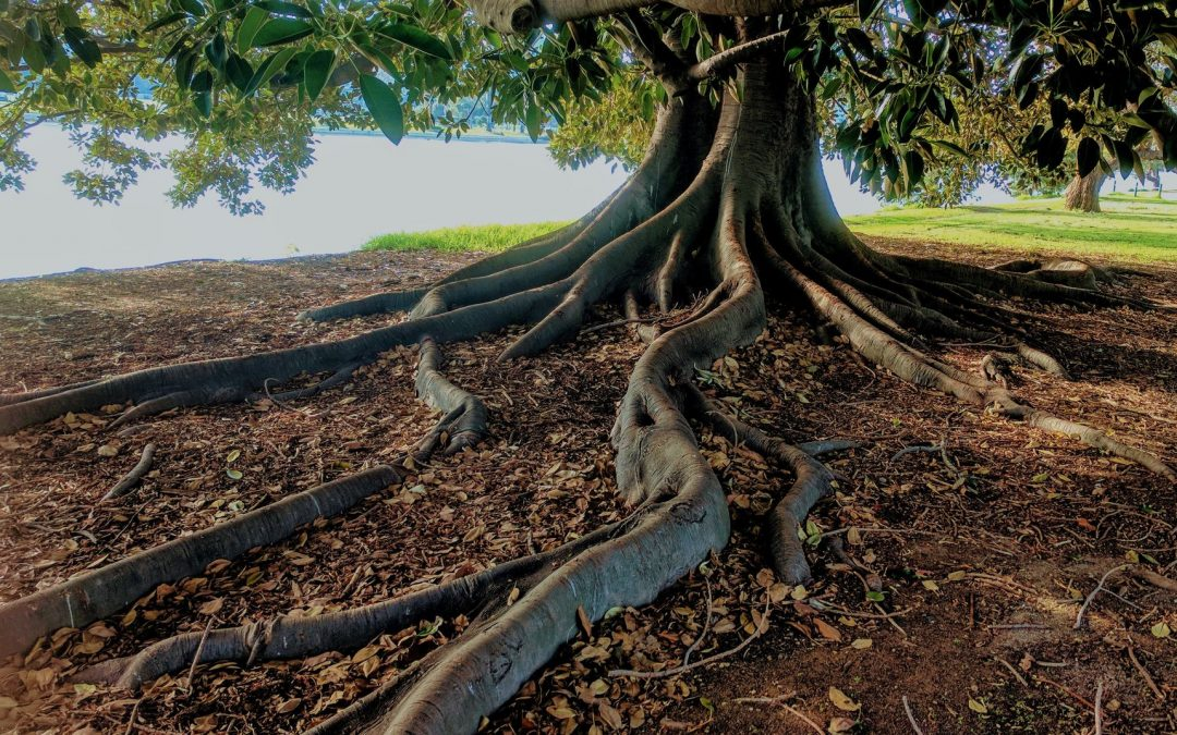 Stuck in Your Business? How to Get to the Root Issue